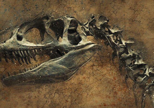 Squelette d'un dinosaure, image d'illustration