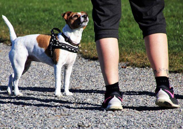 Un homme avec un chien. Image d'illustration