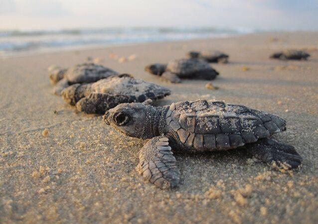 Des petites tortues
