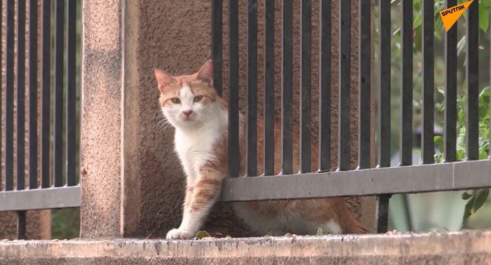 De nombreux animaux de compagnie abandonnés au Liban de peur qu'ils puissent transmettre le Covid-19