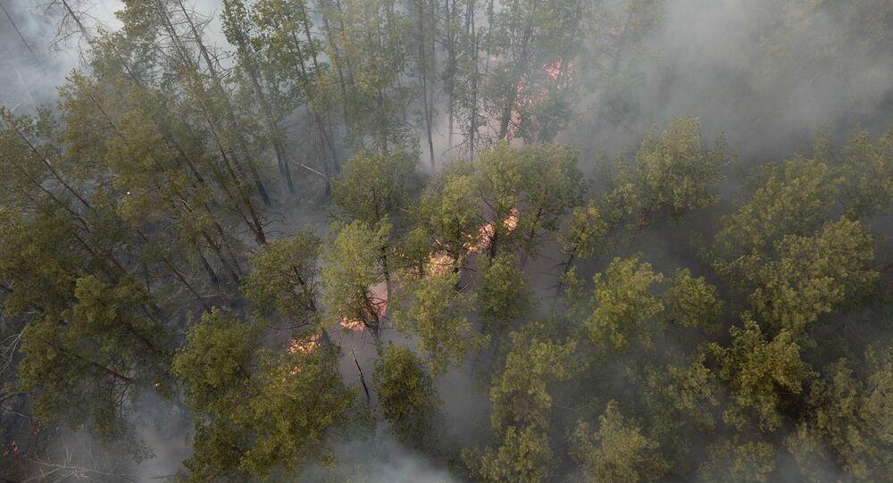 Un incendie de forêt dans la zone d'exclusion de la centrale nucléaire de Tchernobyl
