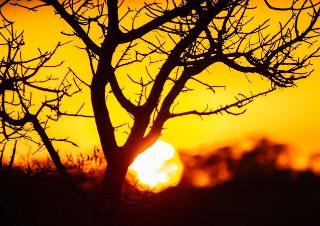 Coucher de soleil dans le parc national Kruger, Afrique du Sud