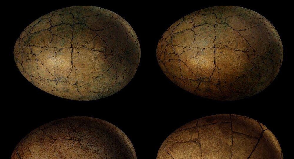 Des œufs de dinosaures (image d'illustration)
