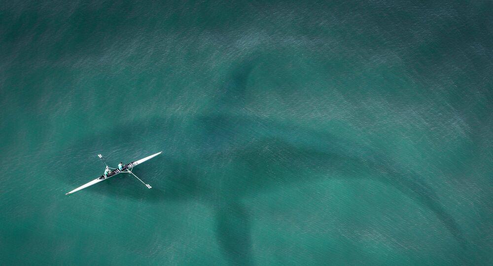 Silhouette d'un requin dans l'eau (image d'illustration)