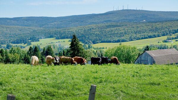 Paysage agricole, Saint-Malachie (Québec), septembre 2019 - Sputnik France