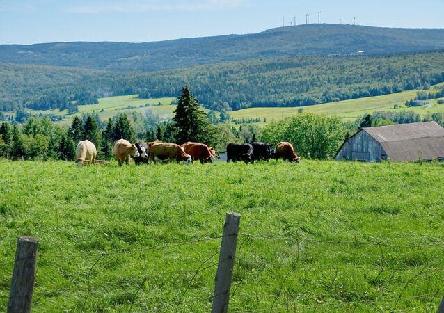 Paysage agricole, Saint-Malachie (Québec), septembre 2019