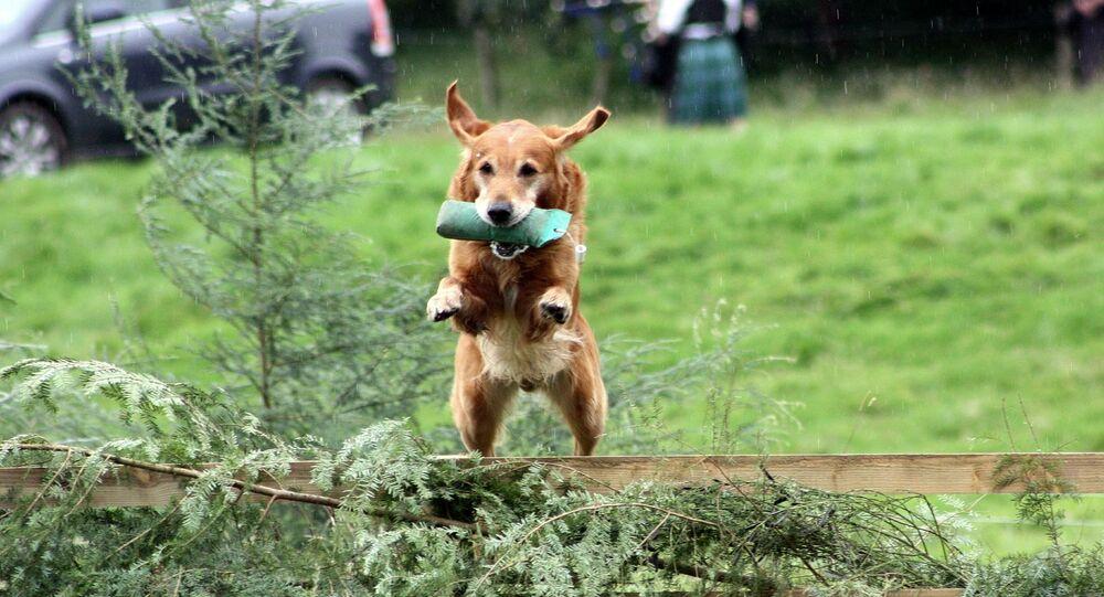 Un chien saute (image d'illustration)