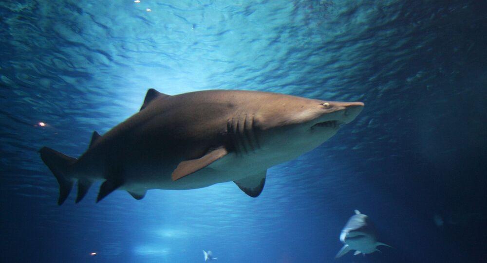 Un requin, image d'illustration