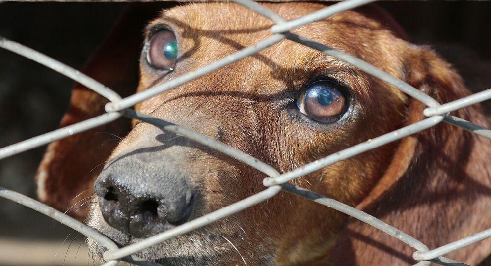 Un chien triste, image d'illustration