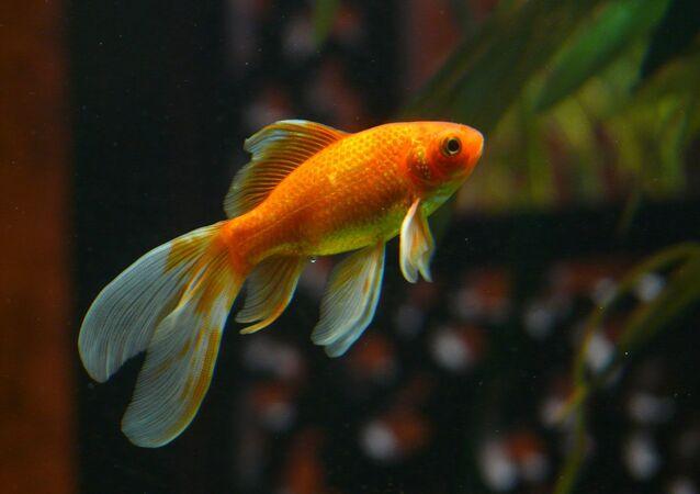 un poisson, image d'illustration