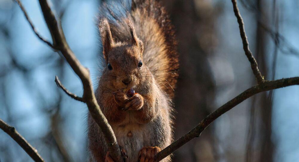 Un écureuil (image d'illustration)