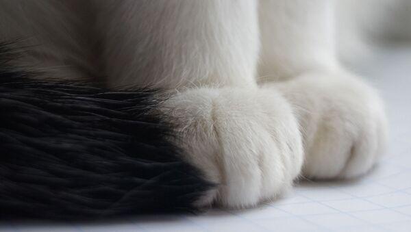 Les pattes d'un chat - Sputnik France