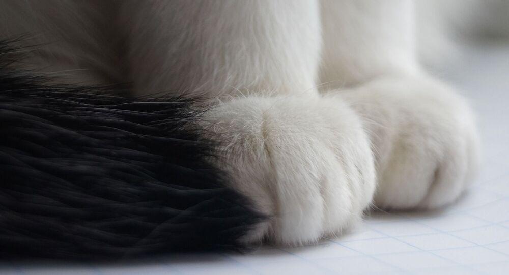 Les pattes d'un chat (image d'illustration)
