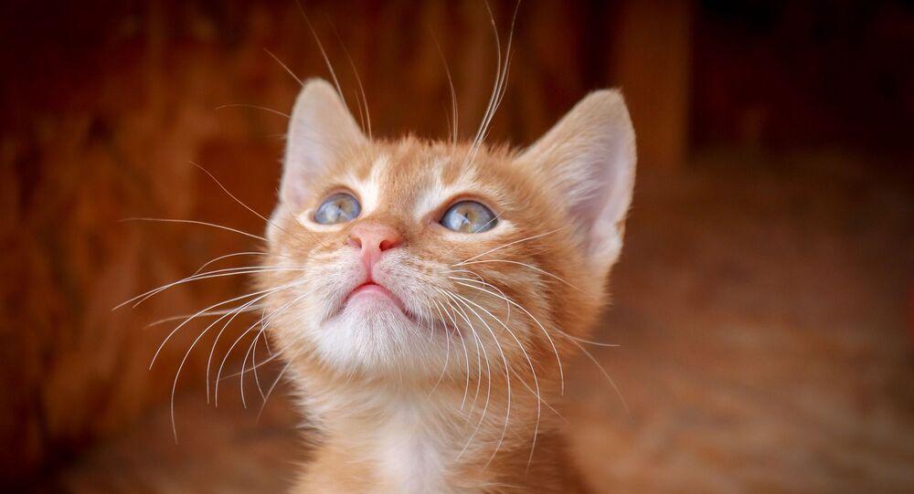 Un chaton (image d'illustration)