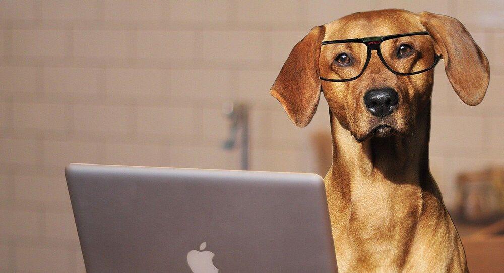 Un chien devant un ordinateur portable, image d'illustration