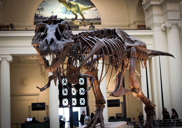 Squelette d'un dinosaure dans un musée