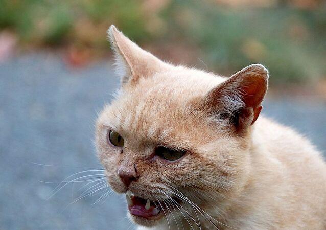 Un chat en colère