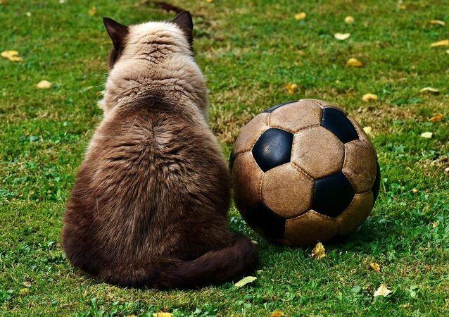 Un chat et un ballon de foot, image d'illustration