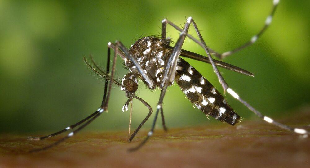 Le moustique tigre (image d'illustration)