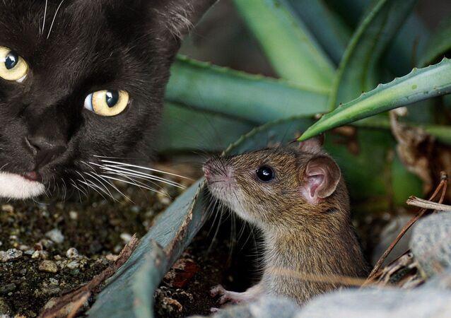 Un chat et une souris