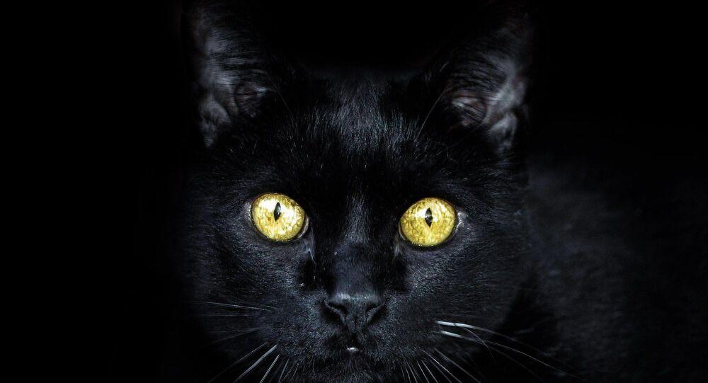 Un chat noir (image d'illustration)