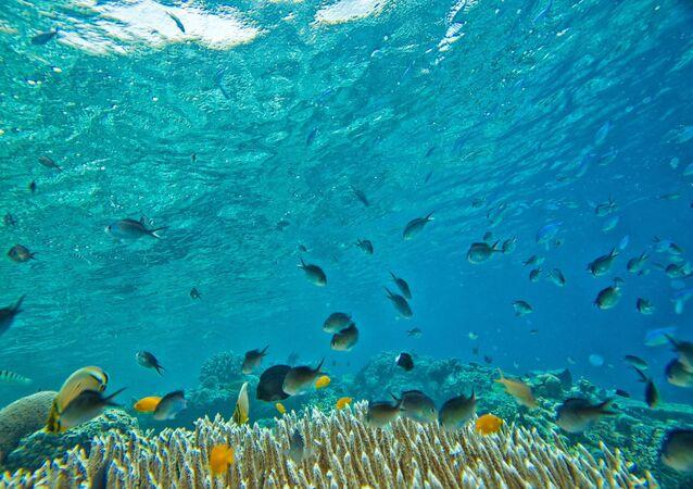 Vie sous-marine (image d'illustration)