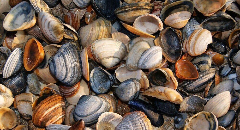 Mollusques, image d'illustration