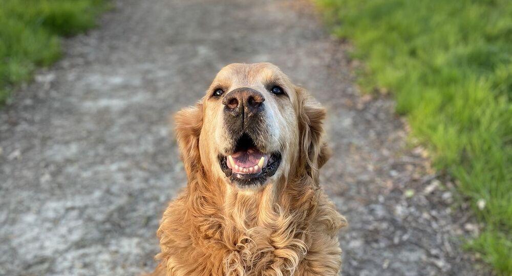 Un chien (image d'illustration)
