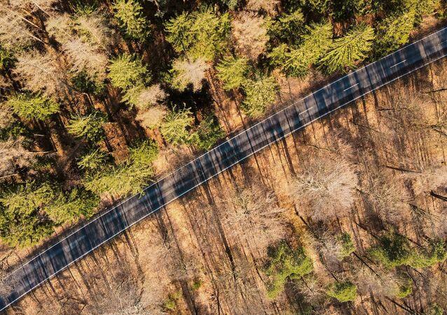Une route forestière, image d'illustration