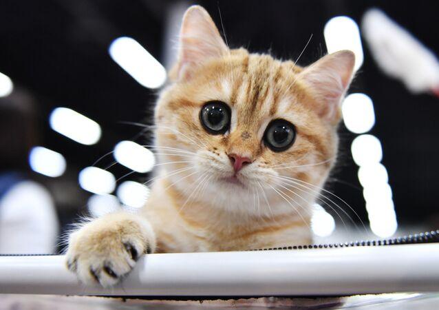 Quand un chat s'essaye à la crème glacée pour la première fois
