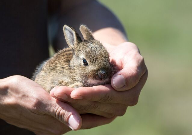 Un lapin (image d'illustration)
