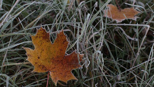feuilles - Sputnik France