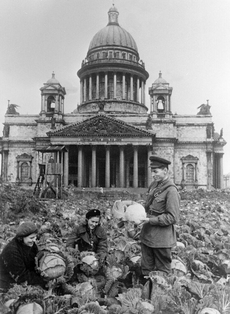 Léningrad. Des soldats et une habitante de Léningrad récoltent des choux sur la place devant la cathédrale Saint-Isaac.