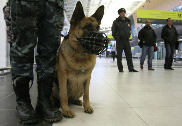 Russie: près de 174 tonnes de drogue saisies les cinq dernières années (FKSN) - Sputnik France